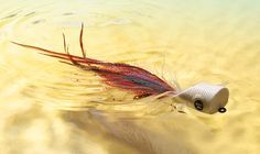 Fly Fishing: Explosive Popper Tactics for 5 Species, Besides Trout. Dry-fly fishing isn't just for trout guys. If you want to see the surface erupt in warm- or saltwater, just tie on a popper—and use these tricks to drive five notorious topwater crushers downright bonkers. Light-Headed Just the sound of a foam popper hitting the water can trigger a strike. Photograph by Ralph Smith