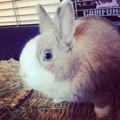 Oh my my ... it's the MIXER!!! Tiffo Rabbit   www.tifforabbit.com