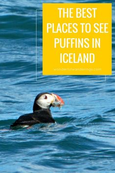 Click through for all the best places to see these adorable little birds in Iceland! From wonderfulwanderings.com