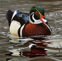 Wood Duck, painting by artist Peter Mathios