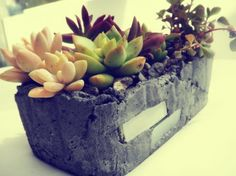 Contained Oasis in hand crafted garden planter. Many varieties of colorful succulents adorn this unique handmade rustic charcoal tinted cement planter with accent glass tiles in two sides. Rustic Planters, Cement Planters, Garden Planters, Planting Succulents, Succulent Plants, Landscaping Tips, Garden Landscaping, Succulent Arrangements, Succulent Ideas