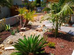 Cool Desert Landscaping Ideas with Small Path also Short Plants in the Backyard Drought Resistant Landscaping, Low Water Landscaping, Drought Tolerant Landscape, Landscaping Trees, Front Yard Landscaping, Landscaping Design, Rustic Landscaping, Landscaping Melbourne, Landscape Curbing