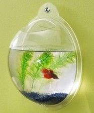 Wall Fish Bowls