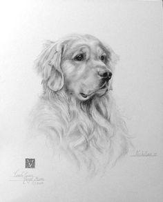 golden retriever pet portrait original pencil by petartportraits black and white dog. Black Bedroom Furniture Sets. Home Design Ideas