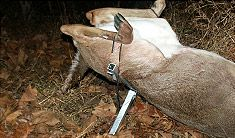 Unique Deer Hunting Field Dressing Tool Portable, Effective on http://www.deeranddeerhunting.com