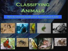 Classification of Animals: Invertebrates and Vertebrates. This 36 page Powerpoint presentation covers all of those animals and much more. More than just a series of informative slides, this educational package contains higher level thinking activities, riddles, and diagrams to keep the students engaged. by Nygren Resources (photo by Beth Scupham @ https://www.flickr.com/photos/bethscupham/7663247816/sizes/m/in/photostream