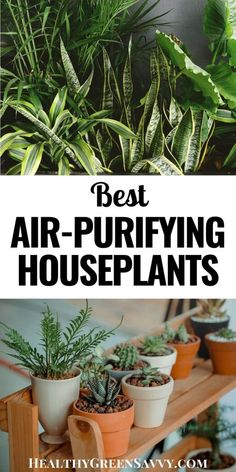 Indoor air can be 5 times more polluted than outdoor air! Want a healthy home? Consider putting these air purifying house plants to work! #nontoxic #houseplants #healthyhome #airquality #health #chemicalsensitivity #greenliving #detox Cool Plants, Air Plants, Indoor Plants, House Plant Care, House Plants, Types Of Houseplants, Green Living Tips, Low Light Plants, Green Cleaning