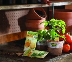 Utilizaremos semillas y las plantas orgánicas Bonnie