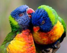 http://www.shortbizz-artikel.blogspot.com/2012/08/jobsingles-wir-verlieben-branchen-jetzt.html Parrots