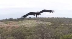 Eagles Hate Drones