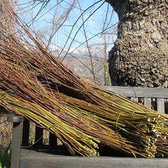 6 -[It] Alcune fascine di salice. [En] Some fagots of willow.