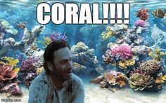 Coral!!!!