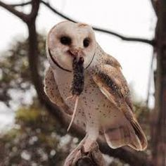 Beautiful, elegant and intelligent, owls are also very efficient at reducing rodent populations.  That makes them a gardener's best friend.  Learn how to attract these amazing birds to your backyard.