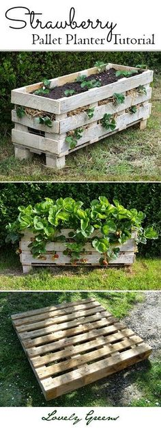 Best DIY Projects: Grow strawberries in small spaces with this project tutorial on how to build and plant up a better Strawberry planter using a single wooden pallet #gardening