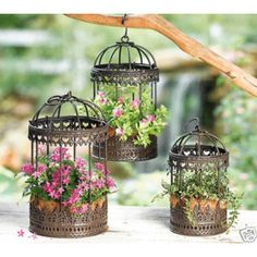 Love the idea of using bird cages to keep birds OUT of your vegetable plants