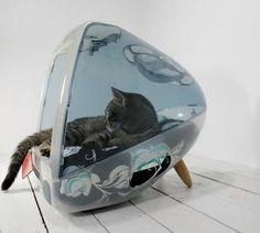 Apple cat house