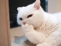 「見ざる聞かざる言わざる」に見えるニャンコのポーズが可愛すぎ! - グノシー