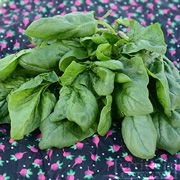 Olympia Spinach, grow for mom and my suggies!
