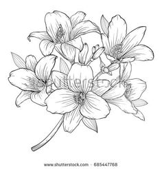 Beautiful Monochrome Black And White Bouquet Lily Isolated On Background Hand Drawn Design