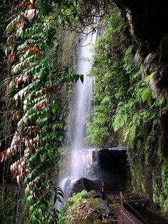 Levada Central da Ribeira da Janela | Madeira | Portugal