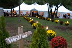 Mariah's Mums a great idea for a fall outdoor wedding. Or I decorated our Family Reunion with her Mums! Fall Wedding Centerpieces, Wedding Decorations, Wedding Favors, Wedding Rings, Fall Sunflower Weddings, Autumn Weddings, Garden Mum, Fall Wedding Bridesmaids, Wedding Dresses