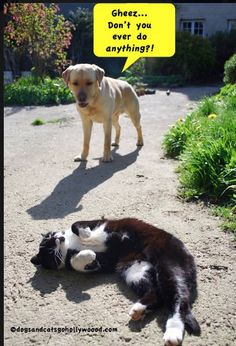 Dogs Have a Funny Time Understanding Cats.