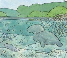 Nature art & illustration blog by studio tuesday