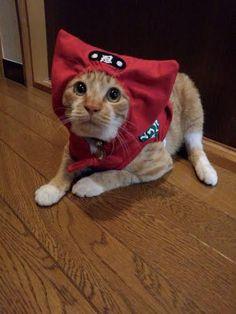my sister in law's cat! Ninja!
