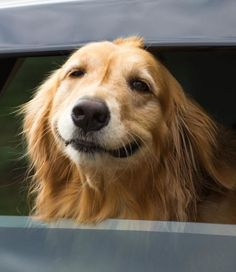 Captured moments of pure happiness - pets on their way to wherever! #happydogsfunny