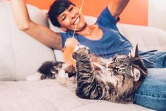 Cat Care Indoors 5 Cat Toy Alternatives to Dangerous Things Your Cat Wants to Play With - Learn about five cat toys that can help distract your kitty from playing with dangerous items in your home. Dangerous Cat, Happy Kitten, Interactive Cat Toys, Siberian Cat, Crazy Cat Lady, Cat Memes, Fleas, Animal Rescue, Cute Cats