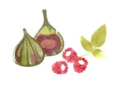 Figs and raspberries, Illustration by Gillian Blease