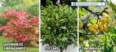 18 Ιδιαίτερα Δέντρα για να Μεταμορφώσετε Ευχάριστα έναν Μικρό Κήπο & την Αυλή Σας ! - share24.gr Vegetable Garden Design, Garden Landscaping, Backyard, Landscape, Vegetables, Architecture, Flowers, Plants, Trees