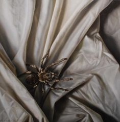 Bed bug study by bronart on DeviantArt Insect Art, Bed Bugs, Study, Deviantart, Home Decor, Studio, Decoration Home, Room Decor, Studying