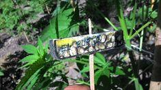 Cosenza sequestrate oltre 3000 piante di Marijuana