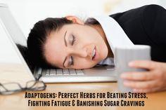 Adaptogens: Herbs for Beating Stress, Fighting Fatigue & Banishing Cravings - Aviva Romm