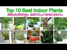 Top 10 Best Indoor Plants   which indoor plants are good for home   Indoor Plants Malayalam - YouTube Garden Online, Best Indoor Plants, Spider Plants, Good Things, Home, Youtube, Ad Home, Homes, Youtubers