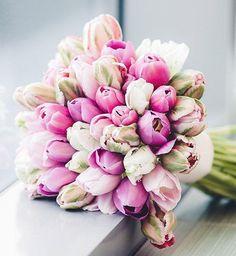 #tulpen #tulips