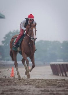 Kentucky Derby and Preakness Stakes Winner California Chrome.