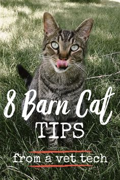 Learn how to properly care for your new barn cat! A veterinary nurse talks about everything you need to know from nutrition to vaccines. Plus a chance to ask questions in the comments for further information. Feral Cat Shelter, Cat Shelters, Feral Cats, Caring For Kittens, Cats And Kittens, Livestock Water Tanks, Tnr Cats, Nurse Cat, Farm Dogs