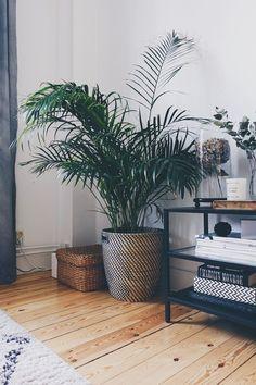 Stueplante: guldpalme