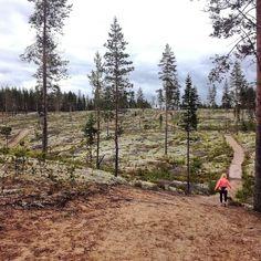 """86 tykkäystä, 2 kommenttia - Rokua TrailRun (@rokuatrailrun) Instagramissa: """"Näissä maisemissa juostaan 20.8 Rokua TrailRun. Tule mukaan www.rokuamtb.com #trailrun #polkujuoksu…"""""""