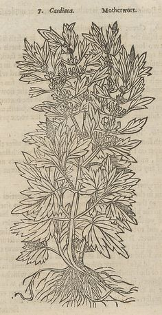 Theatrum Botanicum, the Theatre of Plants or An Universal and Compleat Herball. Written by John Parkinson (British, 1567–1650). Engraver: Title page engraved by William Marshall (British, active 1617–1649/50)