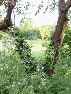 Apple Tree & Queen Anne's Lace