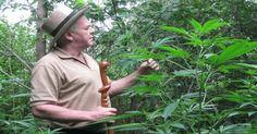 """Este hombre es quien inventó """"La cura del Cáncer con Aceite de Cannabis"""""""