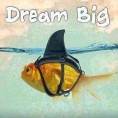 dream big goldfish shark