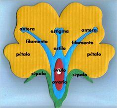 partes de la flor   reciclaycuentacuentos