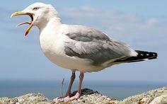 Seagull-Dream.jpg (620×387)