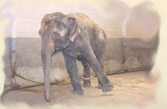 Όταν ήμουν μικρός μου άρεσε πολύ το τσίρκο, και στο τσίρκο μου άρεσαν πιο πολύ τα ζώα. Μου έκανε τρομερή εντύπωση ο ελέφαντας που, όπως έμαθα αργότερα, είναι το αγαπημένο ζώο όλων των παιδιών Good To Know, Wise Words, Elephant, Horses, Grammar, Animals, Magic, Animales, Animaux