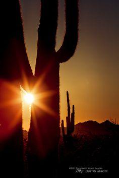 Desert Magic, Scottsdale, Arizona