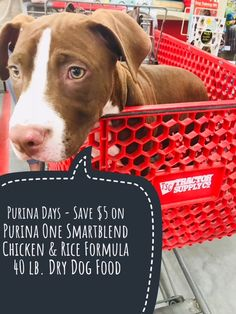 Tractor Supply Co Purina Days | Meet The Newest Addition To Our Family #PurinaDays2018 #PurinaDays {ad}